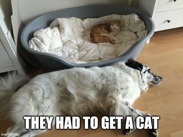 """GET A CAT"" THEY SAID 