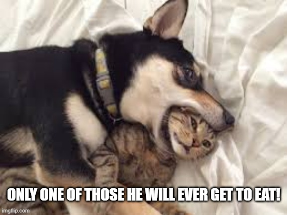 Eating Meow |  ONLY ONE OF THOSE HE WILL EVER GET TO EAT! | image tagged in funny dog | made w/ Imgflip meme maker