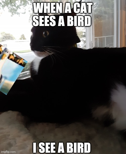 Awkward catge |  WHEN A CAT SEES A BIRD; I SEE A BIRD | image tagged in awkward catge | made w/ Imgflip meme maker