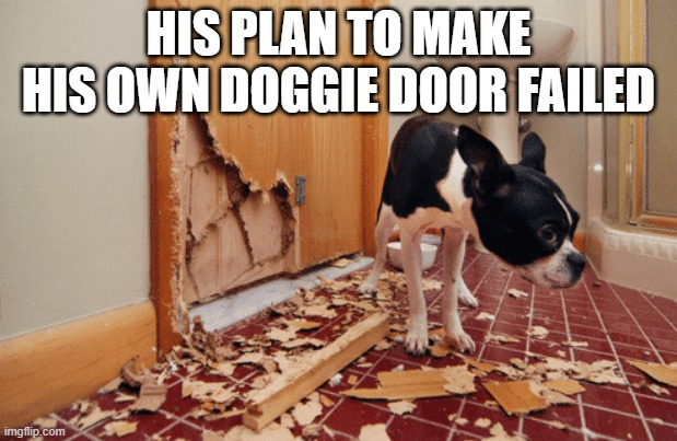 No Way Out |  HIS PLAN TO MAKE HIS OWN DOGGIE DOOR FAILED | image tagged in funny dog | made w/ Imgflip meme maker