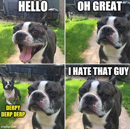 HIM AGAIN |  HELLO; OH GREAT; I HATE THAT GUY; DERPY DERP DERP | image tagged in dogs,dog | made w/ Imgflip meme maker