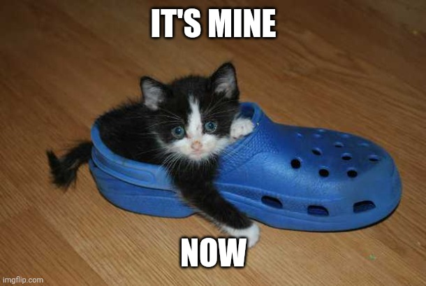 KITTY'S CROC |  IT'S MINE; NOW | image tagged in cats | made w/ Imgflip meme maker
