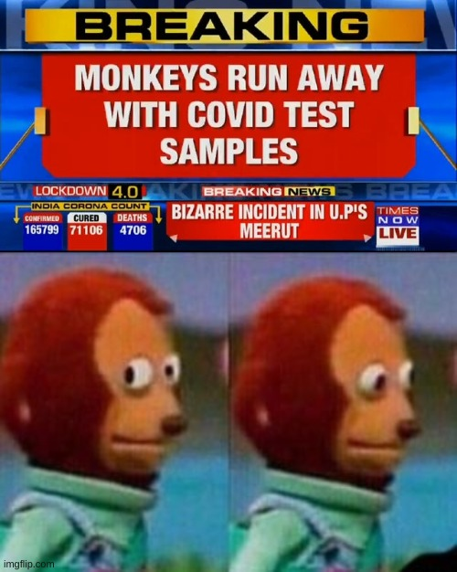 hmmmmmmmmm | image tagged in monkey,samples,test,news | made w/ Imgflip meme maker