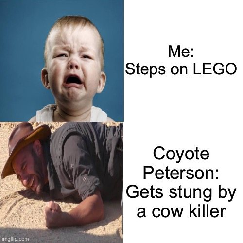I'm not weak... u are |  Me: Steps on LEGO; Coyote Peterson: Gets stung by a cow killer | image tagged in funny,memes,drake hotline bling,lego,crying,crying baby | made w/ Imgflip meme maker