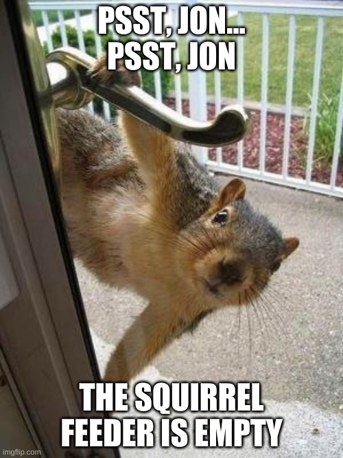 Hungry squirrel |  PSST, JON... PSST, JON; THE SQUIRREL FEEDER IS EMPTY | image tagged in squirrel | made w/ Imgflip meme maker