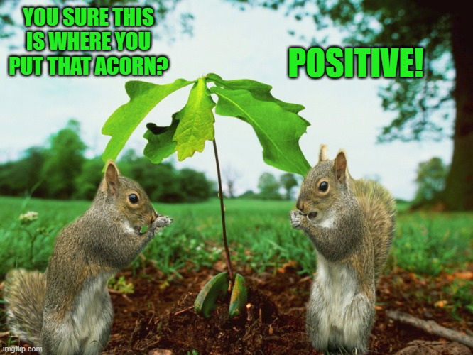 you're nuts! |  POSITIVE! YOU SURE THIS IS WHERE YOU PUT THAT ACORN? | image tagged in acorn,squirrel,funny,kewlew | made w/ Imgflip meme maker