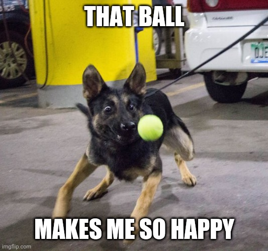 GET IT |  THAT BALL; MAKES ME SO HAPPY | image tagged in dogs | made w/ Imgflip meme maker