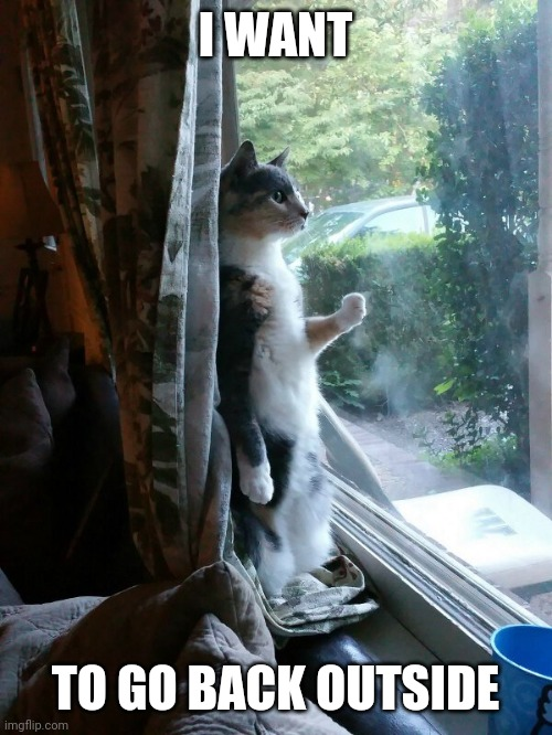 KITTY WANTS OUT |  I WANT; TO GO BACK OUTSIDE | image tagged in cats,funny cats | made w/ Imgflip meme maker