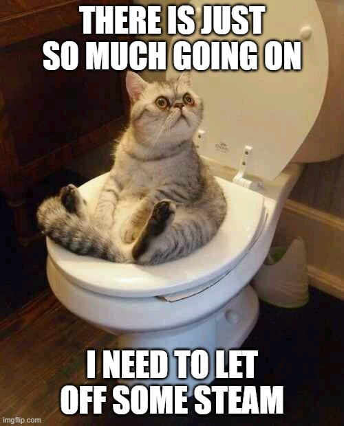 Toilet cat |  THERE IS JUST SO MUCH GOING ON; I NEED TO LET OFF SOME STEAM | image tagged in toilet cat | made w/ Imgflip meme maker