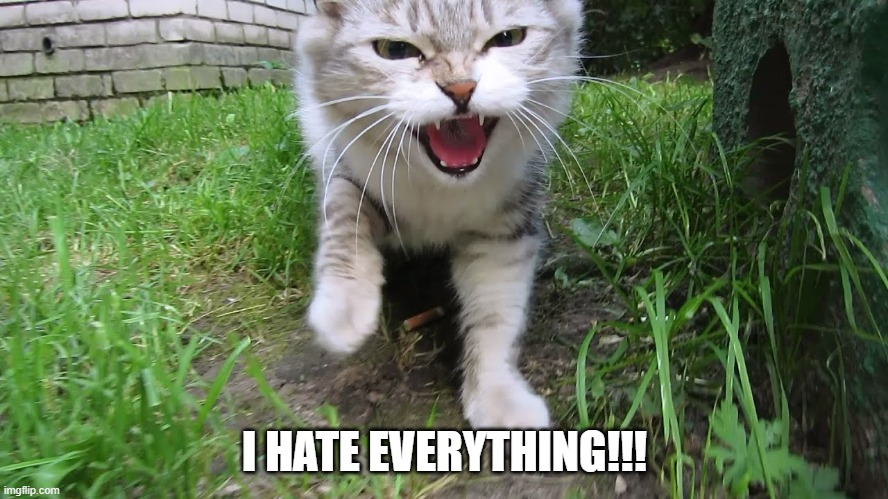 Mad Kitty |  I HATE EVERYTHING!!! | image tagged in mad kitty | made w/ Imgflip meme maker