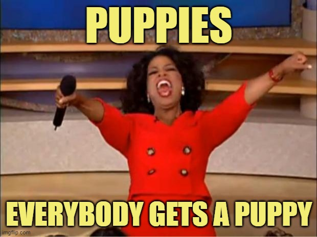 Oprah You Get A Meme | PUPPIES EVERYBODY GETS A PUPPY | image tagged in memes,oprah you get a | made w/ Imgflip meme maker