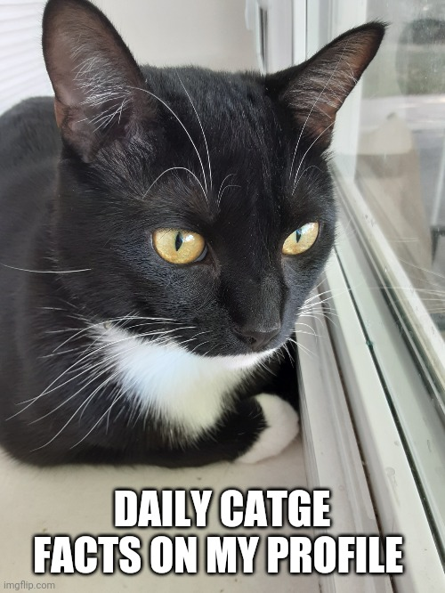 Catge 2 |  DAILY CATGE FACTS ON MY PROFILE | image tagged in catge 2 | made w/ Imgflip meme maker