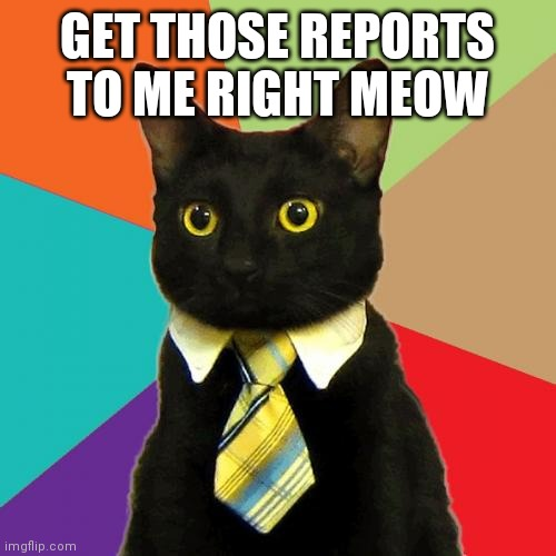 Business Cat |  GET THOSE REPORTS TO ME RIGHT MEOW | image tagged in memes,business cat | made w/ Imgflip meme maker