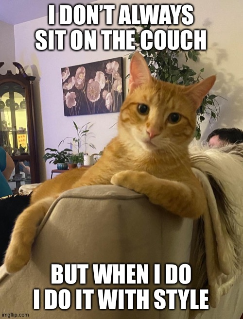 The Most Interesting Cat In The World |  I DON'T ALWAYS SIT ON THE COUCH; BUT WHEN I DO I DO IT WITH STYLE | image tagged in the most interesting cat in the world | made w/ Imgflip meme maker