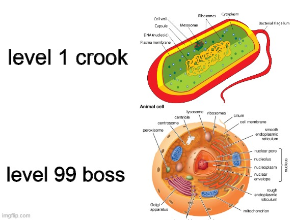 level 1 crook; level 99 boss | image tagged in biology,science | made w/ Imgflip meme maker