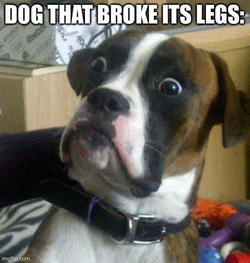 Scared dog | DOG THAT BROKE ITS LEGS: | image tagged in scared dog | made w/ Imgflip meme maker