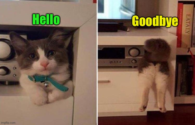 Nice to see you! |  Goodbye; Hello | image tagged in cats,stuck,memes,funny | made w/ Imgflip meme maker