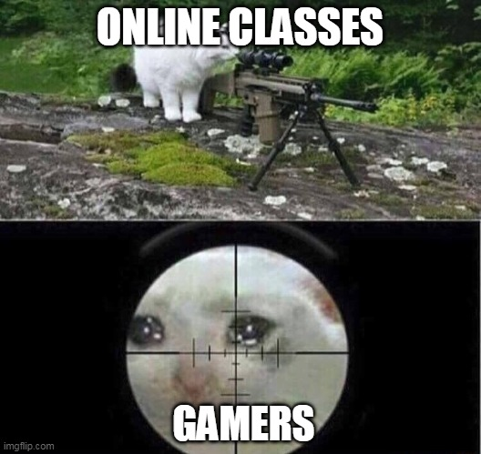 Sniper cat |  ONLINE CLASSES; GAMERS | image tagged in sniper cat | made w/ Imgflip meme maker