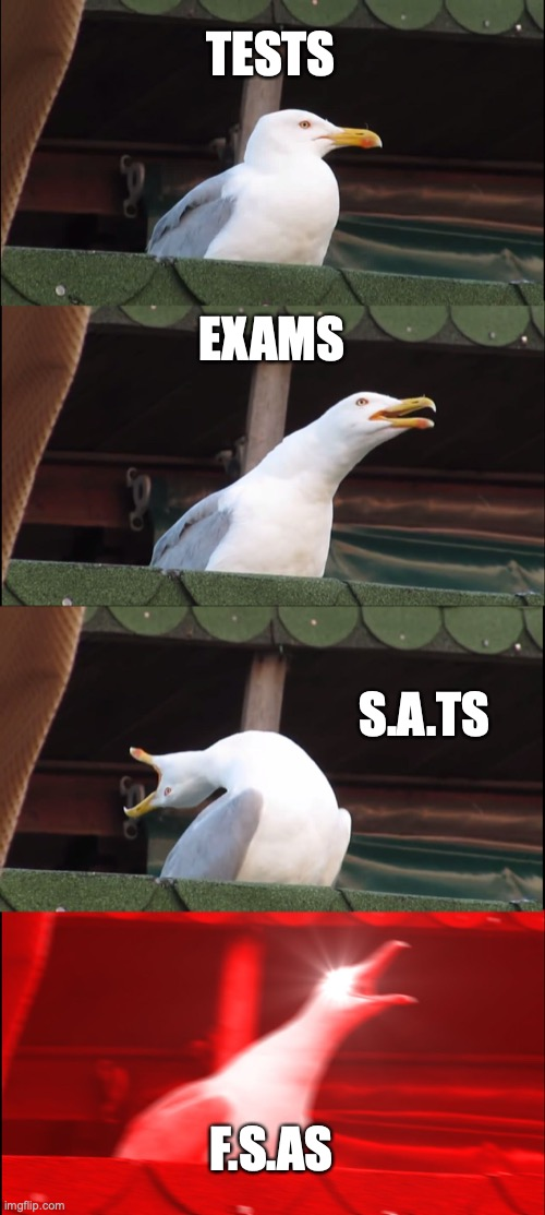 school | TESTS EXAMS S.A.TS F.S.AS | image tagged in memes,inhaling seagull | made w/ Imgflip meme maker