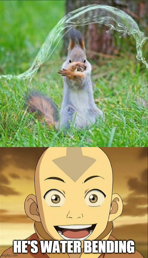 IT'S A WATER BENDER |  HE'S WATER BENDING | image tagged in memes,avatar the last airbender,water,squirrel | made w/ Imgflip meme maker