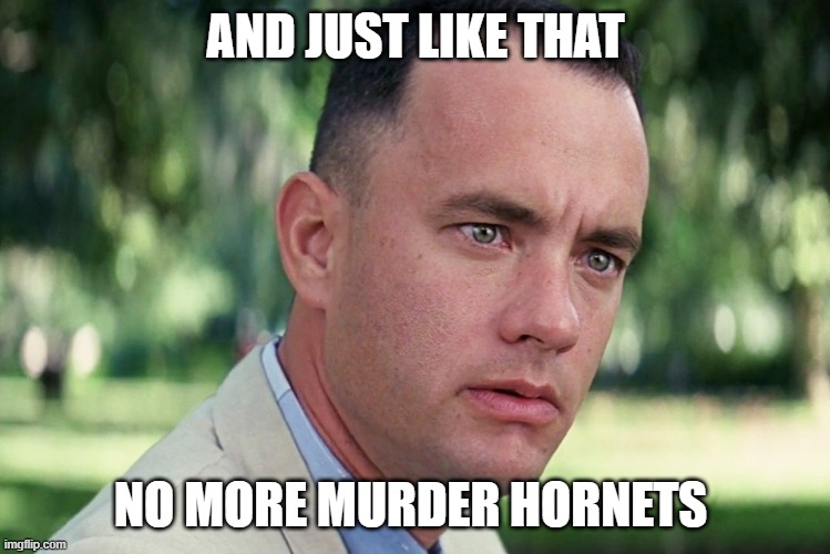 forrest on hornets |  AND JUST LIKE THAT; NO MORE MURDER HORNETS | image tagged in memes,and just like that,lisa payne,new jersey memory page,new jersey,u r home realty | made w/ Imgflip meme maker