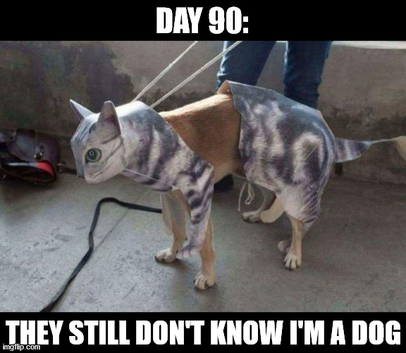 DAY 90:; THEY STILL DON'T KNOW I'M A DOG | made w/ Imgflip meme maker
