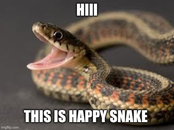 Happy snake |  HIII; THIS IS HAPPY SNAKE | image tagged in happy snake | made w/ Imgflip meme maker