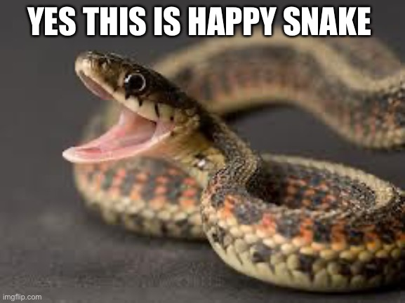 HaPpY sNaKe |  YES THIS IS HAPPY SNAKE | image tagged in warning snake,meme | made w/ Imgflip meme maker
