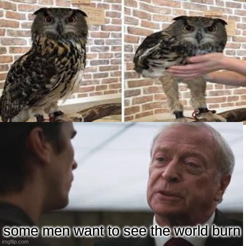 apparently this is true |  some men want to see the world burn | image tagged in owl,owls,legs | made w/ Imgflip meme maker
