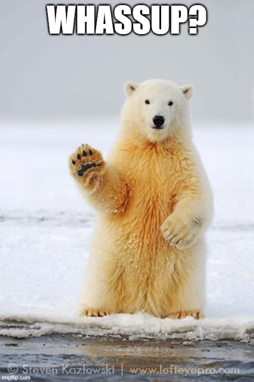 WHASSUP? | image tagged in hello polar bear | made w/ Imgflip meme maker