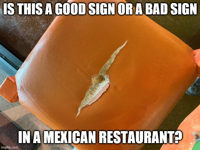 That chair has seen better days. |  IS THIS A GOOD SIGN OR A BAD SIGN; IN A MEXICAN RESTAURANT? | image tagged in mexican food,funny memes,farts,diarrhea,puppies and kittens | made w/ Imgflip meme maker
