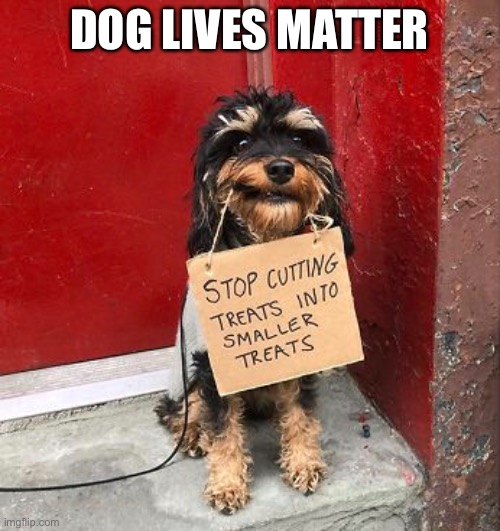 Dog Lives Matter |  DOG LIVES MATTER | image tagged in funny memes,dogs,all lives matter | made w/ Imgflip meme maker