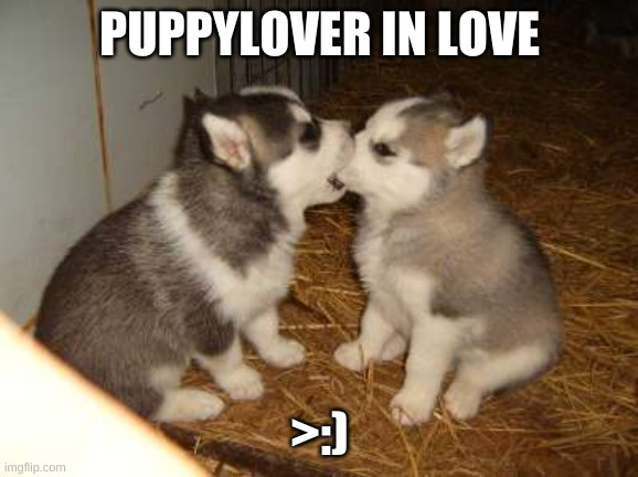 Hehe |  PUPPYLOVER IN LOVE; >:) | image tagged in memes,cute puppies | made w/ Imgflip meme maker