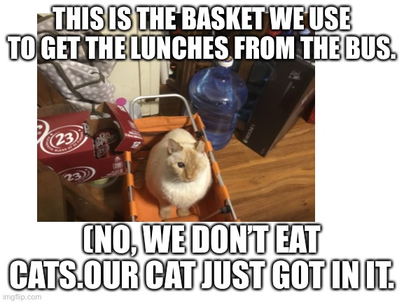 THIS IS THE BASKET WE USE TO GET THE LUNCHES FROM THE BUS. (NO, WE DON'T EAT CATS.OUR CAT JUST GOT IN IT. | made w/ Imgflip meme maker