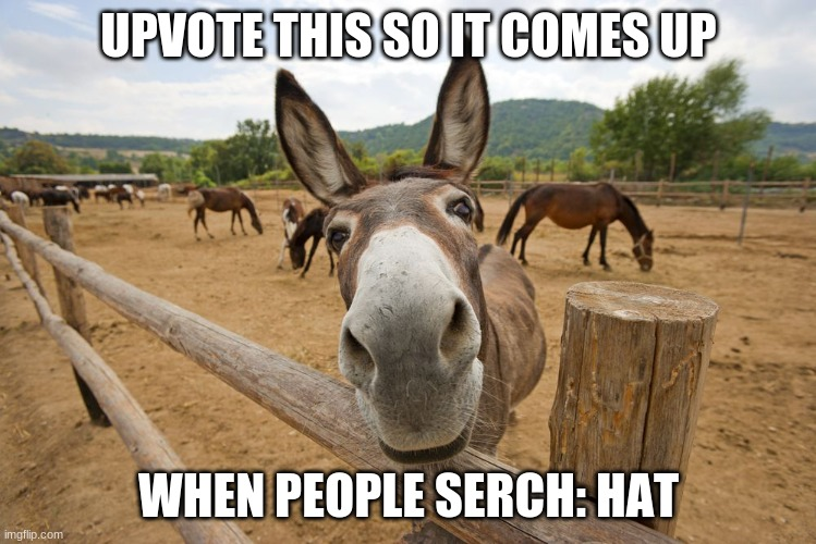 Hat |  UPVOTE THIS SO IT COMES UP; WHEN PEOPLE SERCH: HAT | image tagged in meme,hat | made w/ Imgflip meme maker