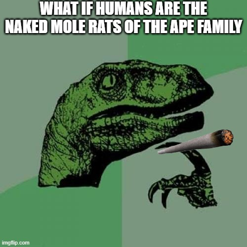 Philosoraptor |  WHAT IF HUMANS ARE THE NAKED MOLE RATS OF THE APE FAMILY | image tagged in memes,philosoraptor | made w/ Imgflip meme maker