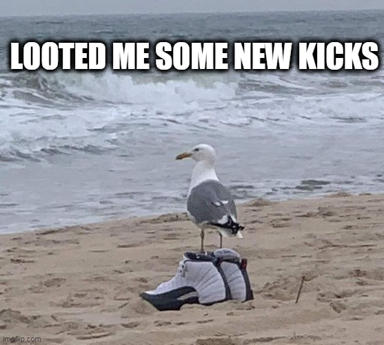 kicks |  LOOTED ME SOME NEW KICKS | image tagged in seagull,pumped up kicks,sneakers,looting | made w/ Imgflip meme maker