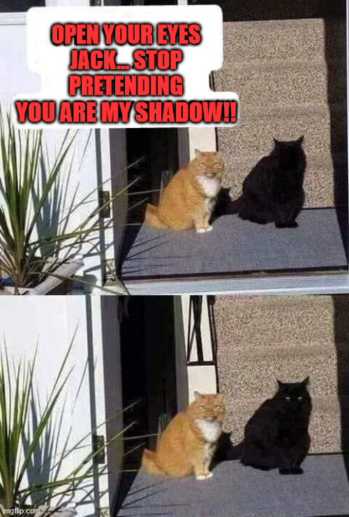 Me and my shadow |  OPEN YOUR EYES JACK... STOP PRETENDING; YOU ARE MY SHADOW!! | image tagged in cats | made w/ Imgflip meme maker