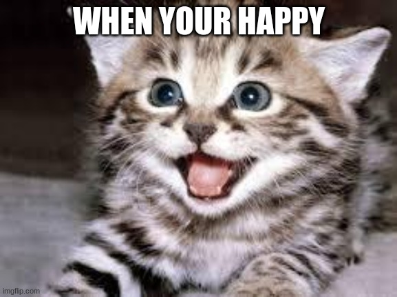 Happy |  WHEN YOUR HAPPY | image tagged in happy cat | made w/ Imgflip meme maker