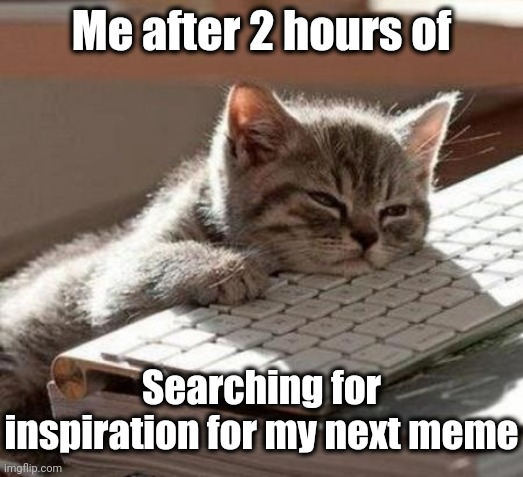 You guys are probably sick of protest and covid-19 memes, so I'm looking for something else! |  Me after 2 hours of; Searching for inspiration for my next meme | image tagged in tired cat | made w/ Imgflip meme maker