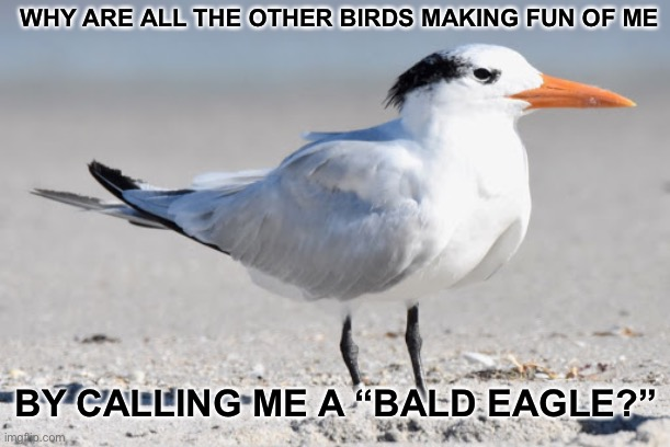 "WHY ARE ALL THE OTHER BIRDS MAKING FUN OF ME; BY CALLING ME A ""BALD EAGLE?"" 