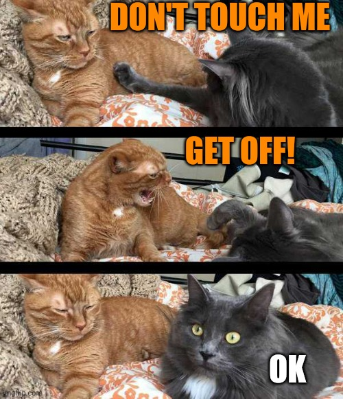 SORRY |  DON'T TOUCH ME; GET OFF! OK | image tagged in cats,funny cats,memes | made w/ Imgflip meme maker