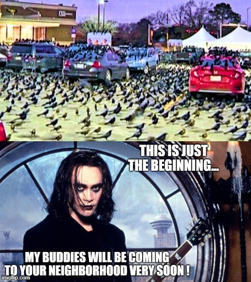 Eric Draven has a prophecy: Black Birds and Crows invading Texas are another sign of the End Time. the Dead Will Rise | image tagged in end times,day of the dead,prophecy,biblical,oh yeah it's all coming together,you can't handle the truth | made w/ Imgflip meme maker
