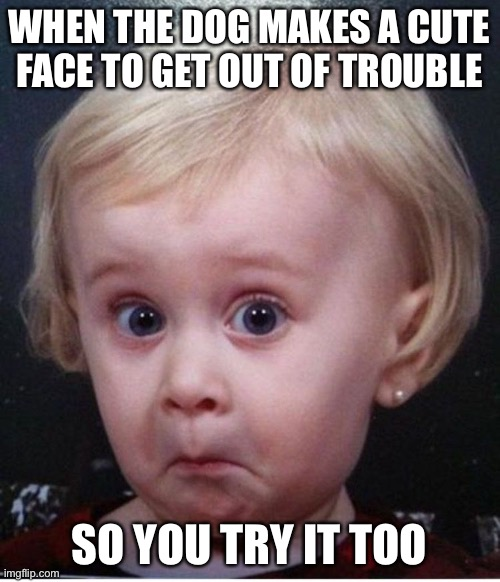 Lol |  WHEN THE DOG MAKES A CUTE FACE TO GET OUT OF TROUBLE; SO YOU TRY IT TOO | image tagged in funny face kid | made w/ Imgflip meme maker