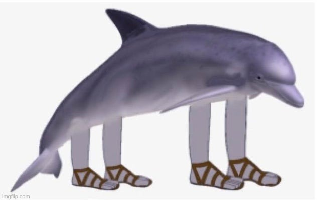 This is Richard the dolphin. Use him in image form or for reference | image tagged in richard the dolphin,religion | made w/ Imgflip meme maker
