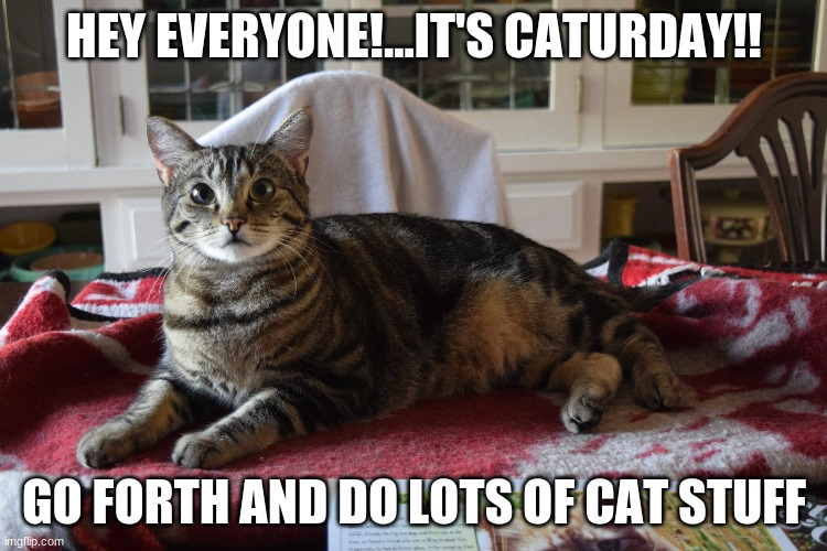 Happy Caturday From Lucky the Duran Duran Kitty |  HEY EVERYONE!...IT'S CATURDAY!! GO FORTH AND DO LOTS OF CAT STUFF | image tagged in cats,happy caturday,adorable kitties,lucky the duran duran kitty | made w/ Imgflip meme maker