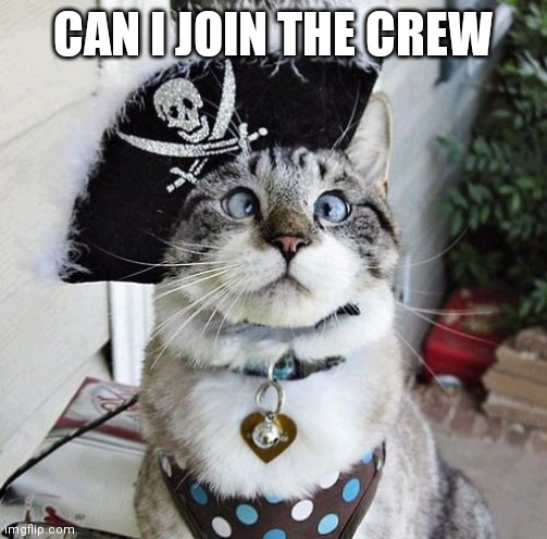 Spangles |  CAN I JOIN THE CREW | image tagged in memes,pirates | made w/ Imgflip meme maker