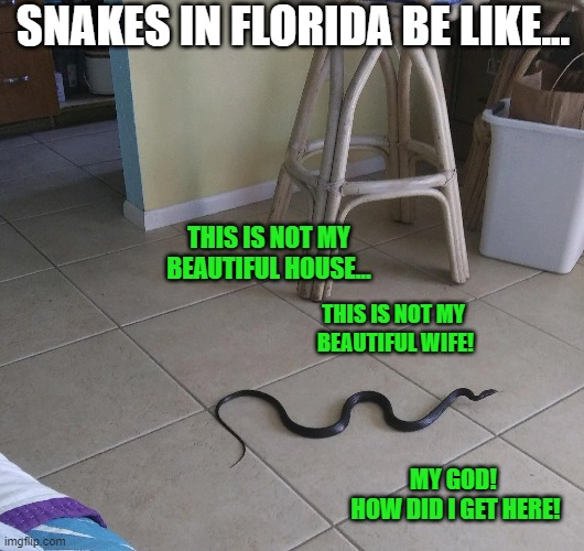 Down & Out in Beverly Hills (FL) |  SNAKES IN FLORIDA BE LIKE... THIS IS NOT MY  BEAUTIFUL HOUSE... THIS IS NOT MY  BEAUTIFUL WIFE! MY GOD!  HOW DID I GET HERE! | image tagged in florida,meanwhile in florida,snake,funny,movie quotes,animals | made w/ Imgflip meme maker