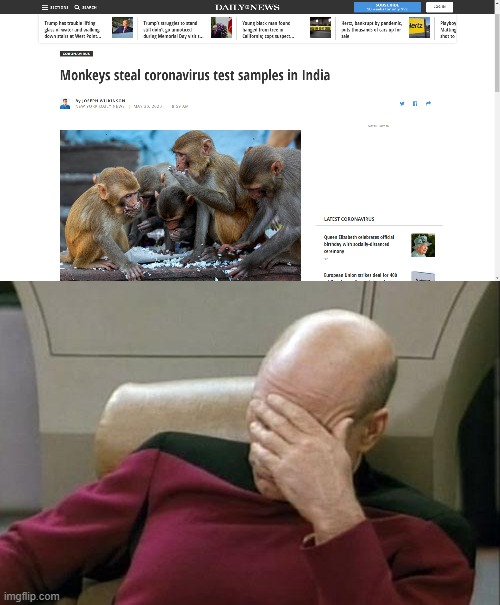 Bruh, HOW AND WHY?! | image tagged in memes,captain picard facepalm,covid19,funny,fun,monkeys | made w/ Imgflip meme maker