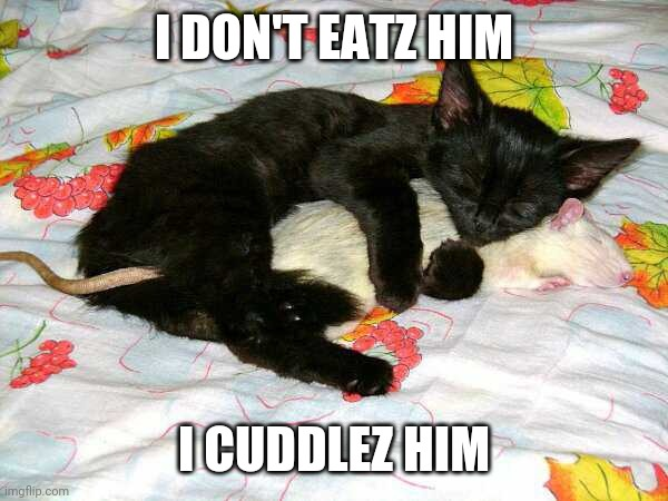 BEST FRIENDS |  I DON'T EATZ HIM; I CUDDLEZ HIM | image tagged in cats,funny cats | made w/ Imgflip meme maker